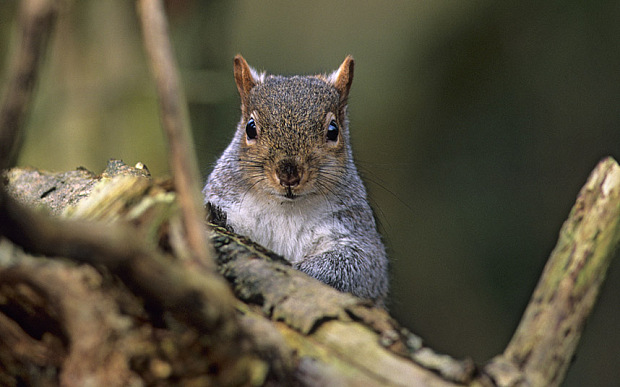 Spoiler Squirrel is looking out for you.