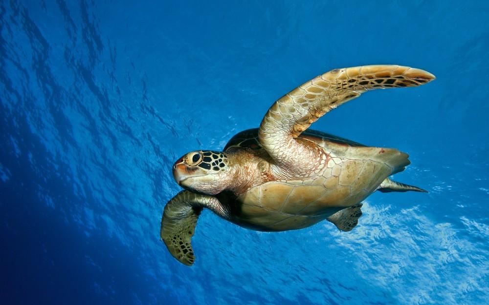 sea-turtles-4